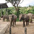 沙巴動物園