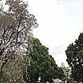 201804東京賞櫻