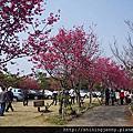 2015/02*雲林嘉義走春