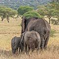 Tanzania*Tarangire National Park