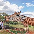 Kenya*Giraffe Manor 長頸鹿莊園