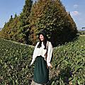 1612 【台中品冬】追尋落羽松的浪漫-DAY2