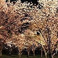 ◤春 ♥ 京都/2013™.第一日◢:關空、二条城、麵屋七福神