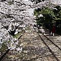 ◤春 ♥ 京都/2013™.第二日◢:山科、蹴上駅、清水寺和服體驗、八阪神社、祗園