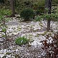 ◤春 ♥ 京都/2013™.第四日◢:嵐山、天龍寺、野宮神社、金閣寺、錦市場