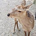 ◤春 ♥ 京都/2013™.第五日◢:奈良、興福寺、春日大社、茶寮都路里