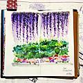 2014 初夏‧東京旅人日誌/紫藤芝櫻遊記