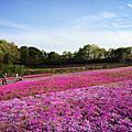 2014 東京紫藤與芝櫻之旅