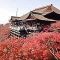 [20131202] 京都賞楓