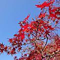 [20131203] 岡山後樂園&廣島原爆紀念館