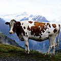 2014瑞士自由行DAY5