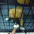 07-05-10狗baby長大了