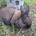 08-03-29兔散步