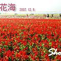 2007新社花海