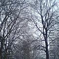 倫敦四季之冬。雪