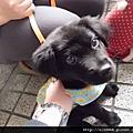 0324 puppy