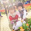 台南公園花季