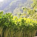 從產地到餐桌   「百壽有機芽菜農場」各式芽苗大開眼界