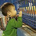 台中看棒球 2013.12