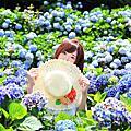 外拍。陽明山繡球花