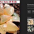 Haworthia correcta hyb. / 克雷克大 / コレクタ