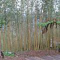 東眼山-綠光森林
