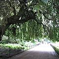 海德公園-Hyde Park