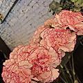 希朵花藝設計