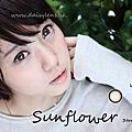 Daisylens★Sunflower3TONE向日葵三色