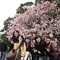 99/04/02櫻花季