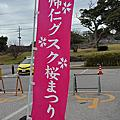 沖繩 Okinawa 櫻花 2017