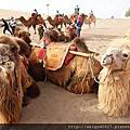 02 鳴沙山騎駱駝1小時