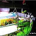水晶蝦缸水草缸 文章