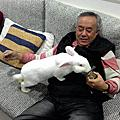 2013-2018  兔子照片(老兔)
