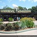 奧蘭多迪士尼世界--動物王國