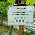 102.02.02 特別企劃-中華民國童軍總會第二期團長知能研習營