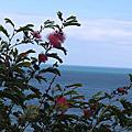 風 雲 海 樹
