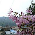 20110309 南庄行