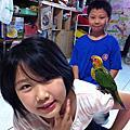 鴨鴨 - 金太陽錐尾鸚鵡
