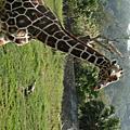 20090225動物園