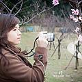 【小豬】櫻花