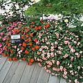 花博公園-玫瑰園