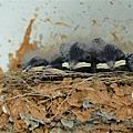 2010.05.02 燕窩