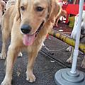 2006.12 寵物嘉年華