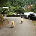 2006.08福山玩水記