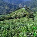 松林農場綠色保育紀錄