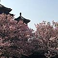 三月的邂逅 (東方寺)