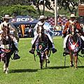 caballo peruano de paso 2012