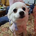 全世界最可愛的狗