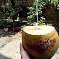 0825砍椰子印象